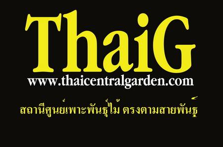 ศูนย์เพาะพันธุ์ไม้ Thaig thaicentral garden