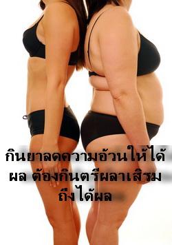 ตรีผลาช่วย เสริม ให้ยาลดความอ้วน